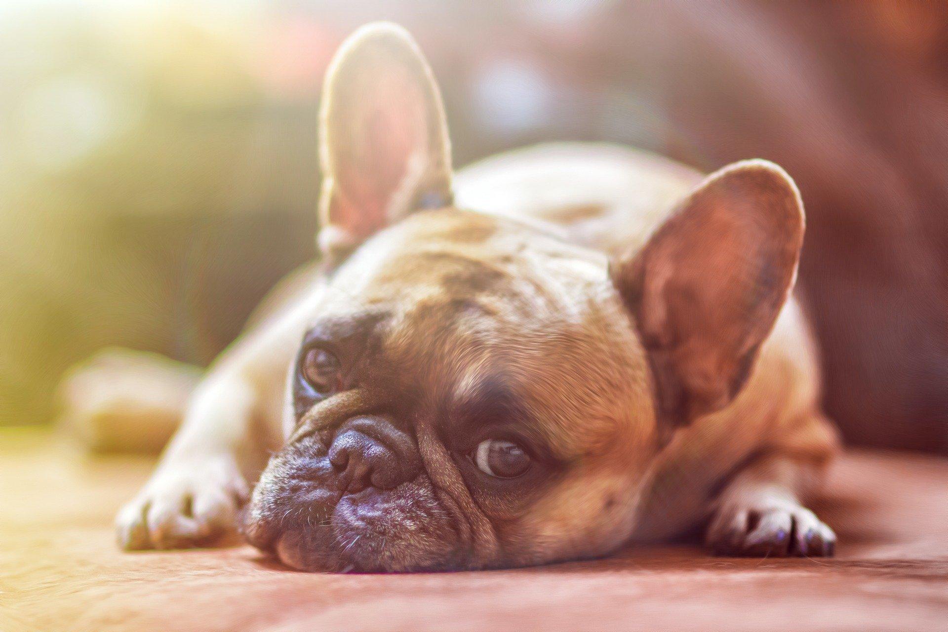 Lo que debe hacer para que la cuarentena no afecte el ánimo de su mascota/Crédito de fotos: Pixabay.com