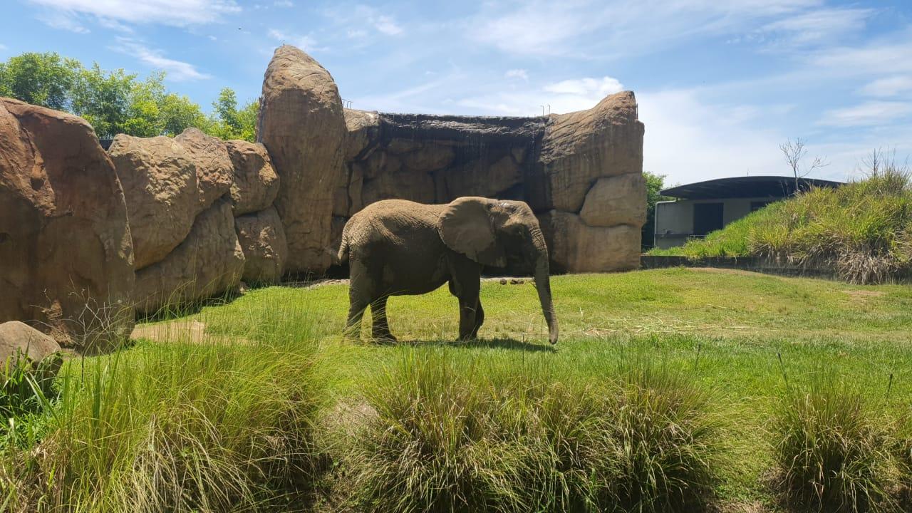 Elefanta Kim en monitoreo, por incultura ciudadana