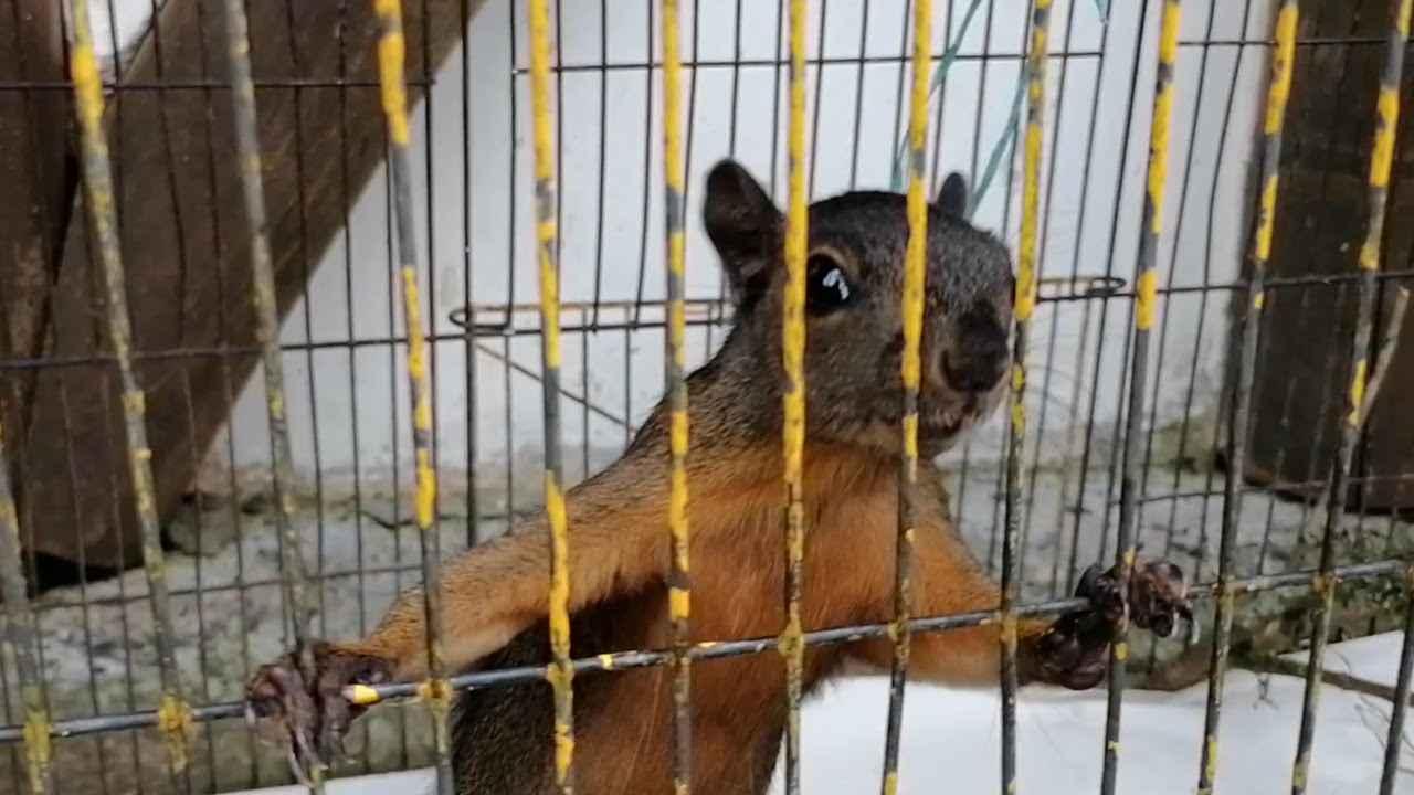 Continúa la lucha contra el tráfico ilegal de animales en Risaralda